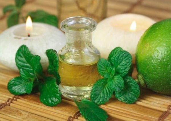 Масло мяты поможет избавиться от запаха