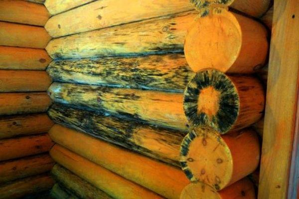 Деревянная поверхность пораженная грибками синевы