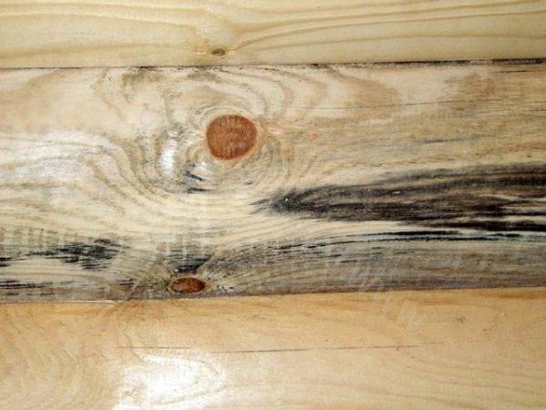 Дымовой грибок на дереве