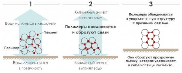 Схема высыхания акриловой краски