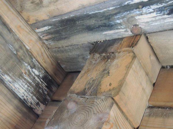 Белый грибок на древесине