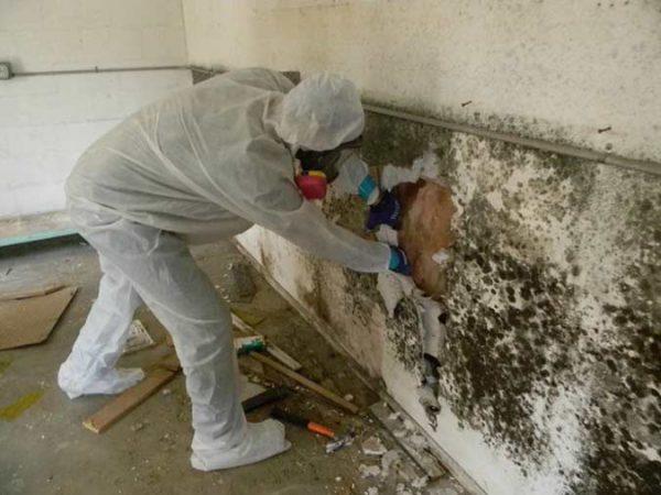 Чтобы избавиться от плесени на стенах часто приходится удалять отделочные материалы