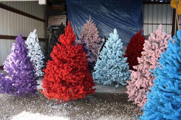 Покрашенные акриловой краской елки могут простоять несколько месяцев