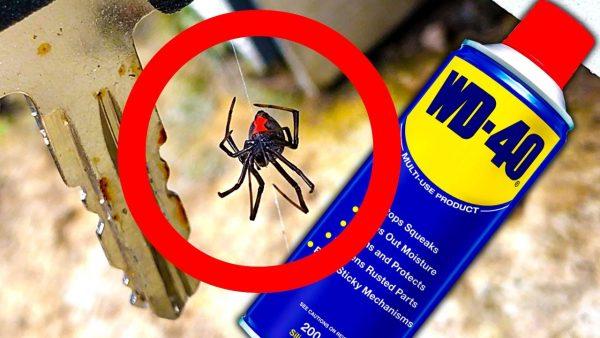 Обработка помещения от насекомых