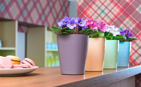 Цветы в горшках в интерьере