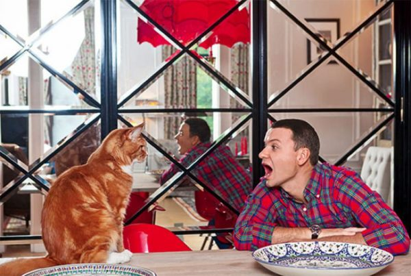 Александр Олешко на кухне со своим рыжим котом