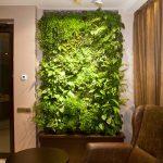 Фитостена из комнатных растений