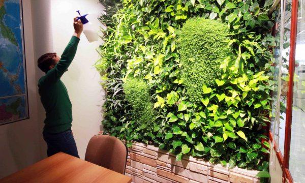 Увлажнение растений из распылителя