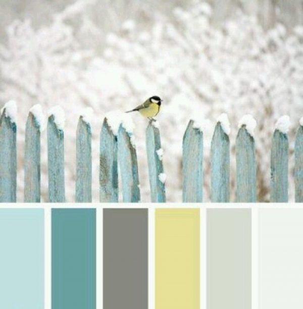 Зимние цвета