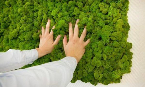 Стабилизированный мох для декора