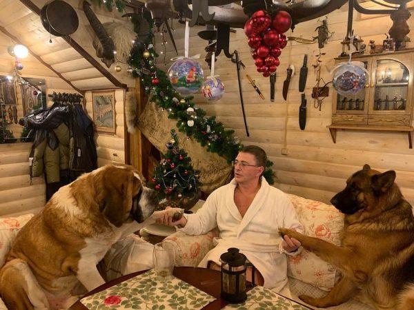 Доктор Мясников с собаками