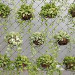 Сетка для вертикального озеленения