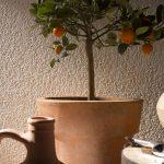 Штукатурка декоративная Апельсиновая корка