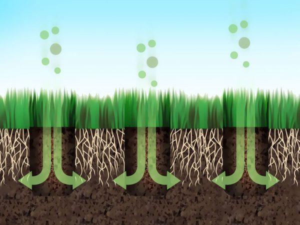 Процесс аэрации почвы