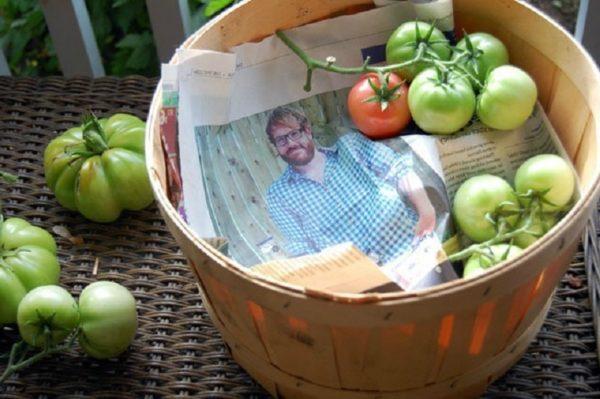 На газете хорошо дозревают помидоры