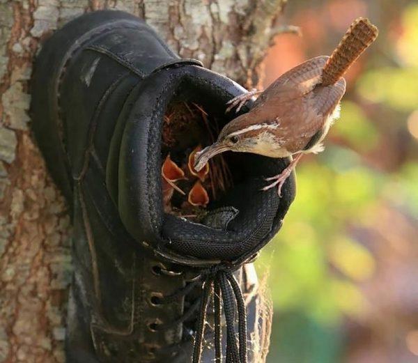 Гнездо в ботинке