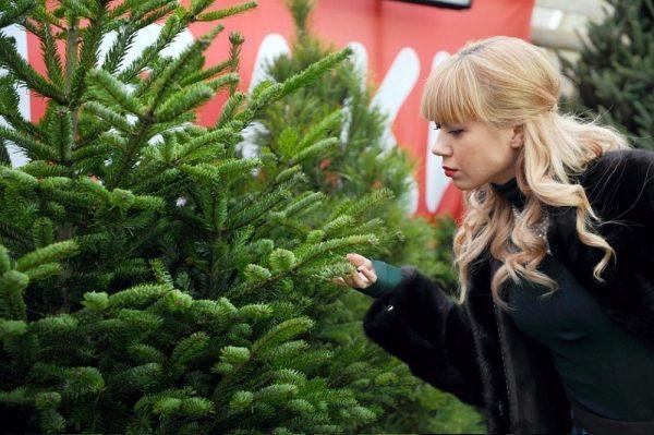 Покупка живой елки