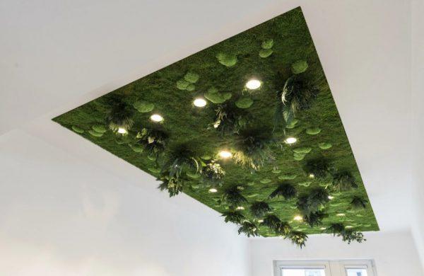 Потолок из стабилизированных растений