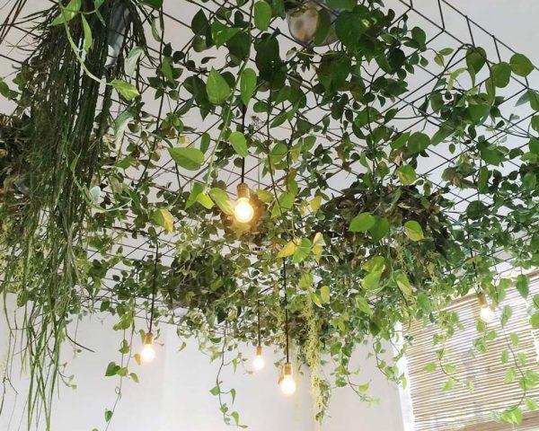 Растения под потолком