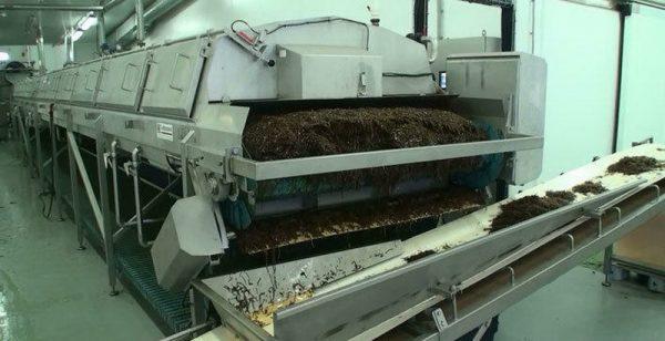 Производство водорослевого утеплителя