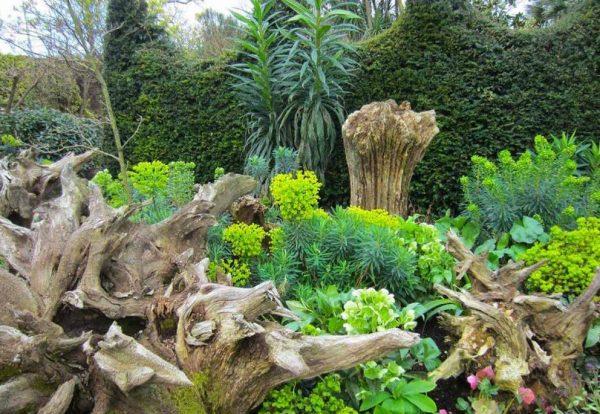 Рутарий с растениями