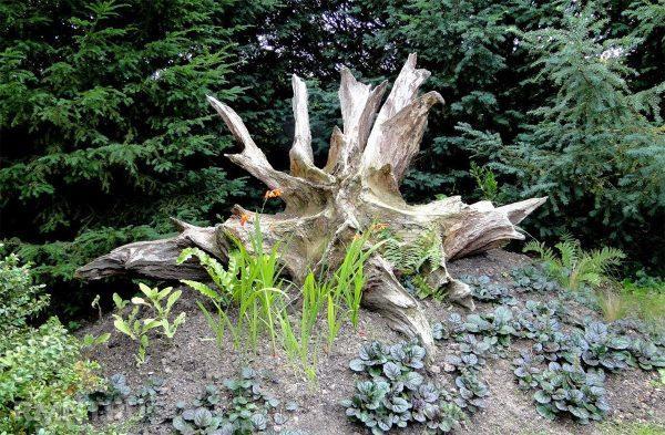 Сад коряг на дачном участке